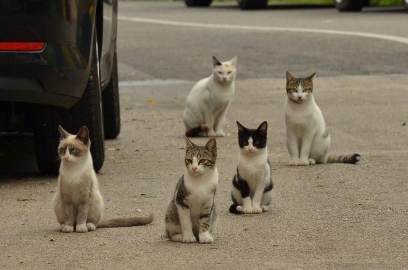 ロマサガ2の陣形を組む猫たち