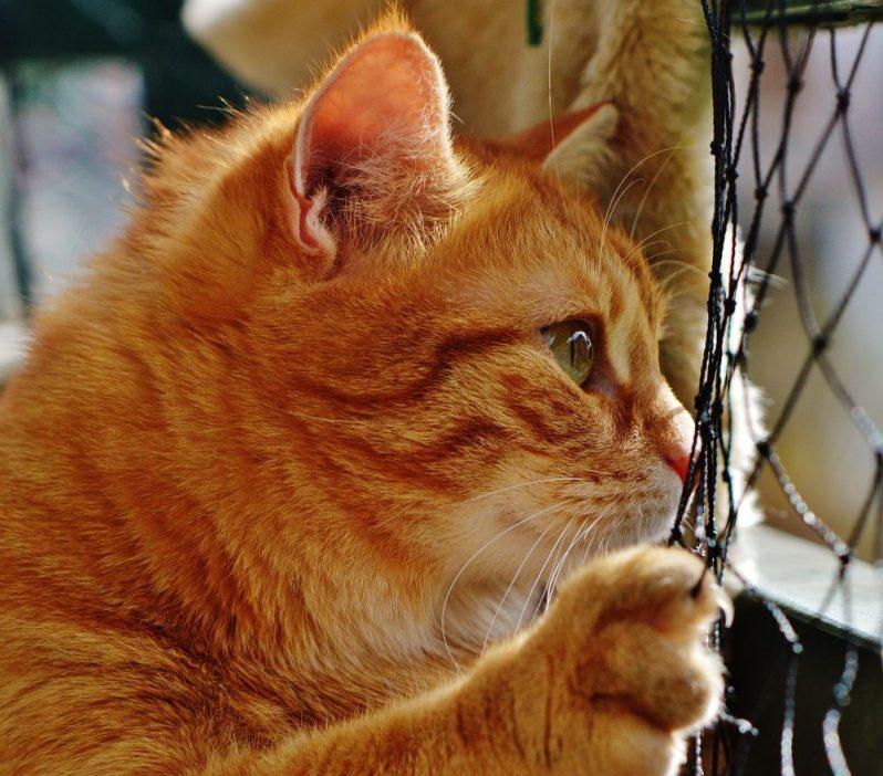 優良な中小企業の見つけ方を探している猫