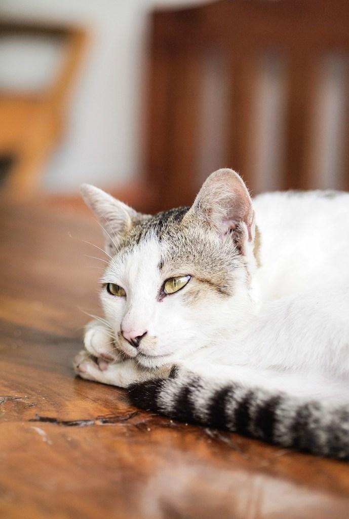 就活のためにアルバイトをするべきか悩む猫