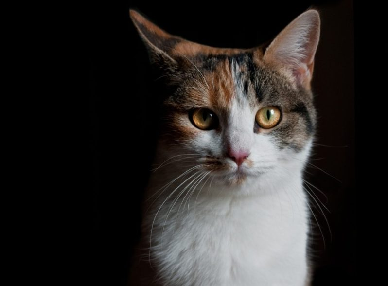自己PRを盛ることに悪気はない猫