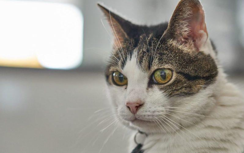 人気企業内定者の志望動機に共通点があることに驚きを隠せない猫