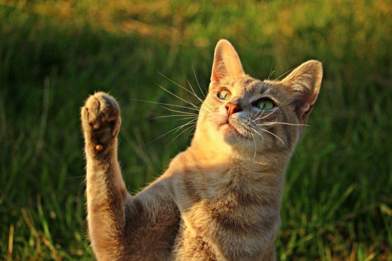 福利厚生制度を活用して副業の申請をする猫