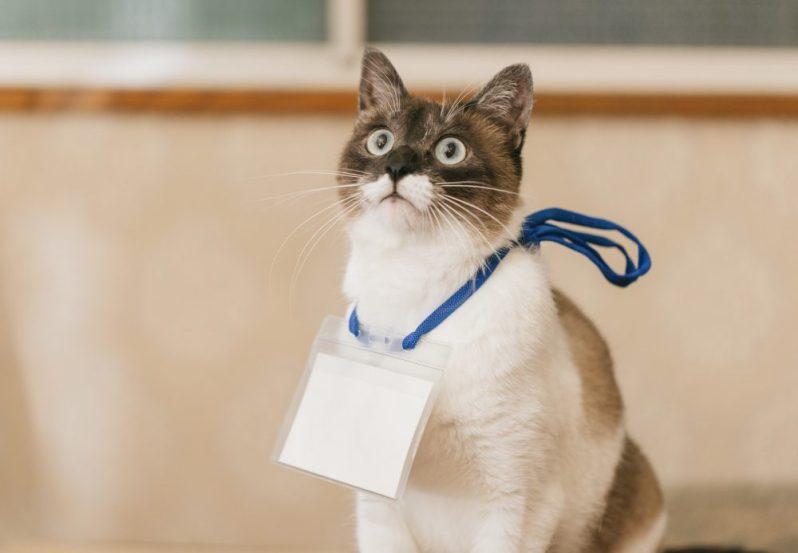 インターネット業界やWeb業界の優良企業に感銘を受ける猫