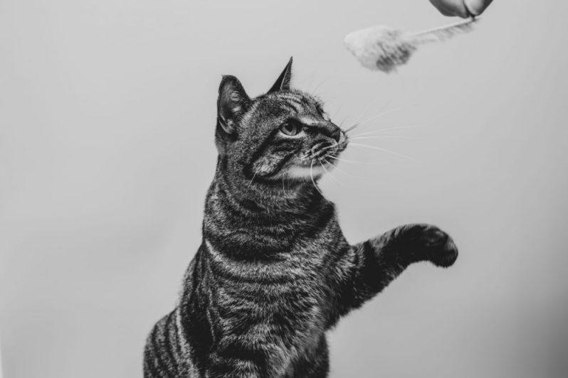 転職エージェントとは何か? を分かっていない猫