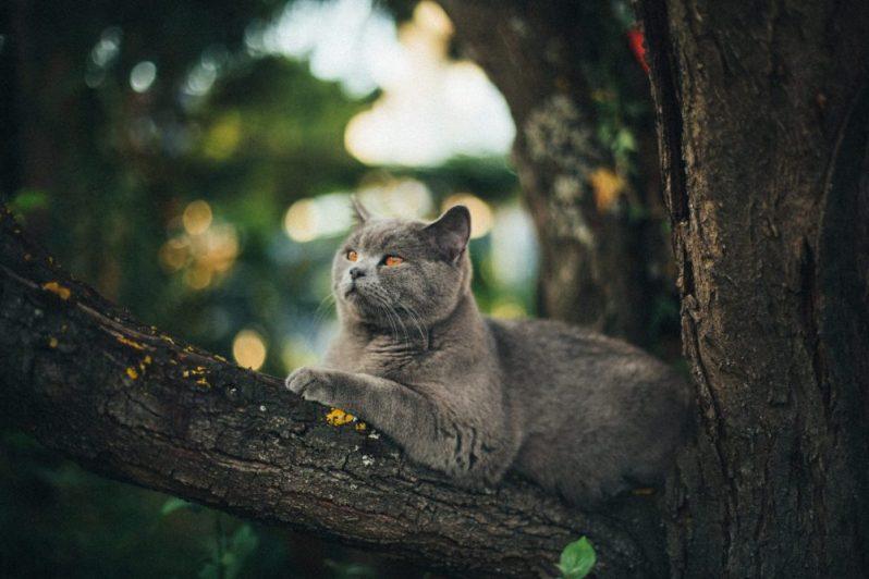 自己成長したいなら仕事と向き合うべきと考える猫