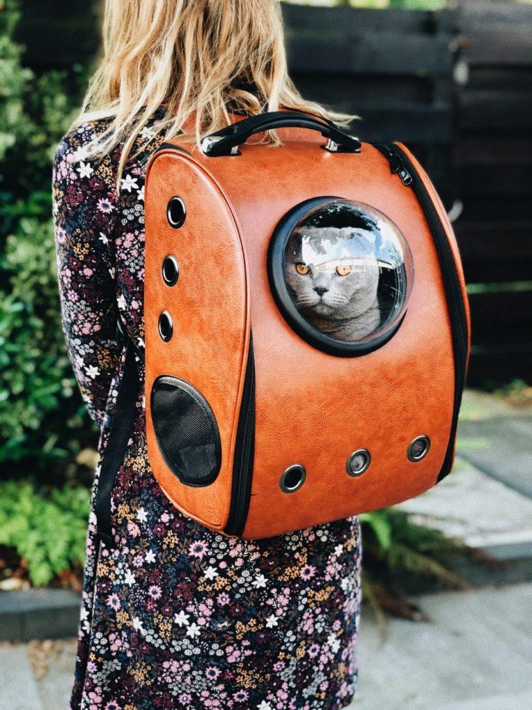 長期インターンに出かける猫