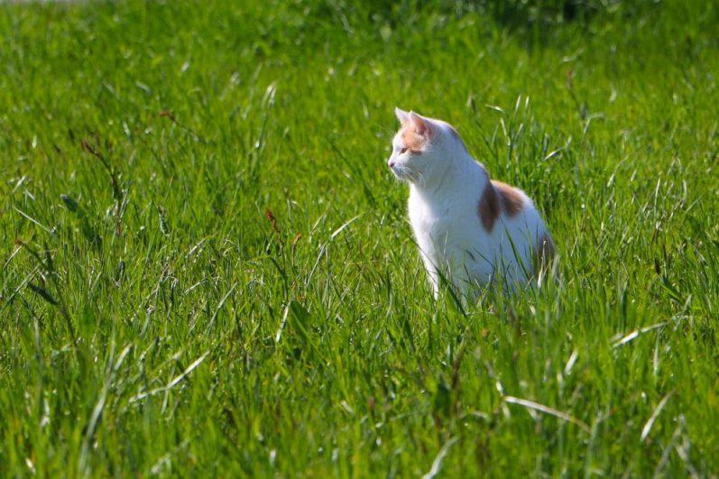 テック分野(アグリテックやエドテックなど)の事業に挑戦している企業を知りたがる猫