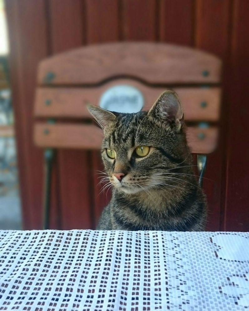 ノアの箱舟の乗船資格をかけて自己PRをする猫