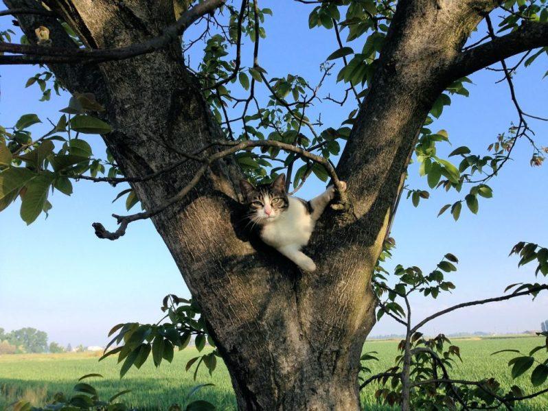 転職におすすめの時期はいつなのかを気にする猫