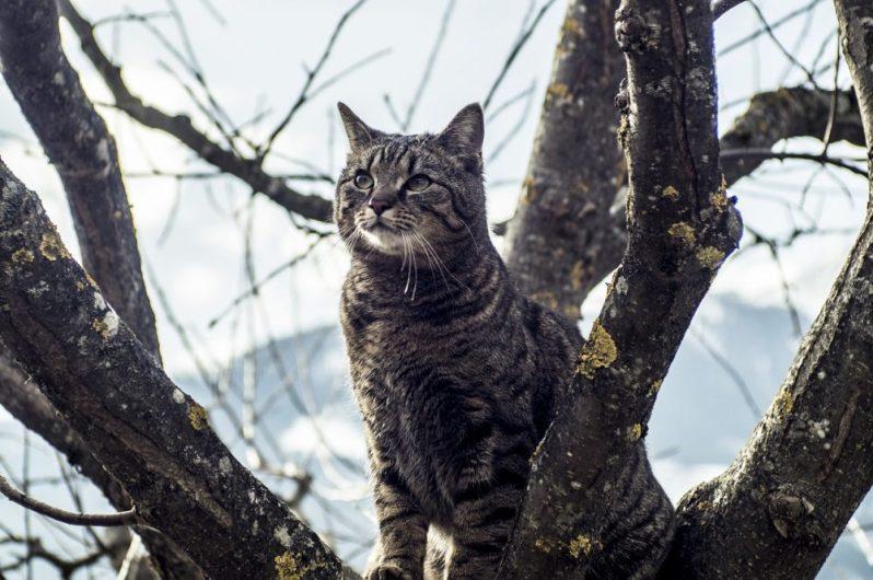 転勤なしの条件を探す猫