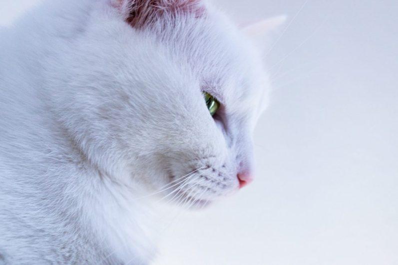 好きなことを仕事にしたい人へアドバイスをする猫