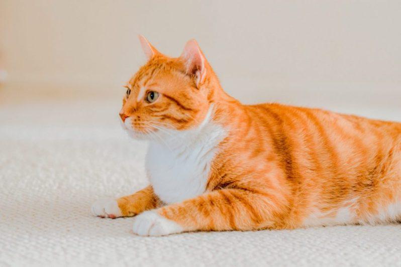 就活に時間を使えば使うほどに就活が上手くいかなくなる理由を聞かされる猫