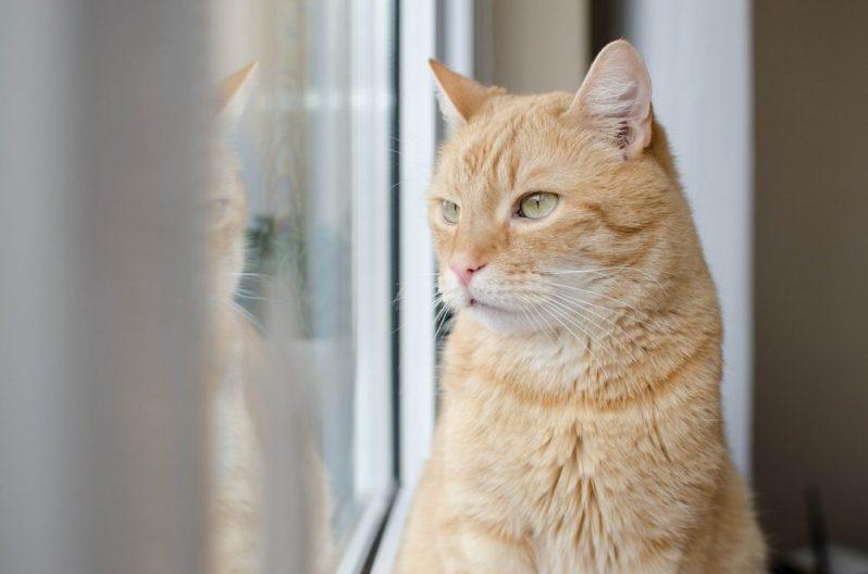 転職相談相手を間違えたかもしれないと後悔する猫