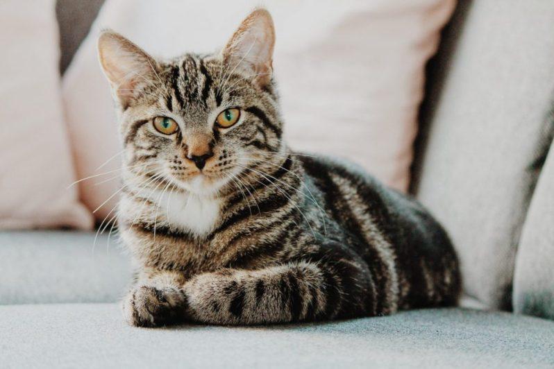 おすすめの就活サイトを語る猫