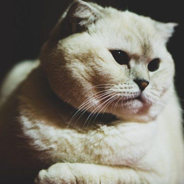成長を遂げた猫