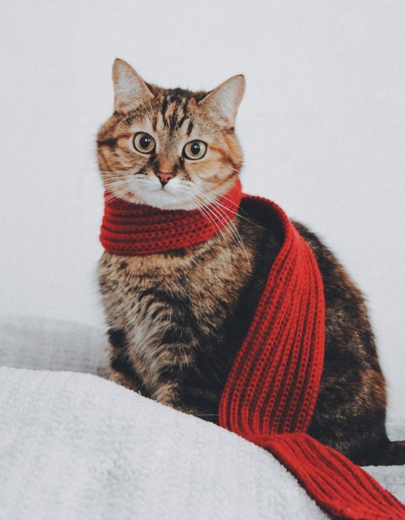 インターンシップに参加したい猫