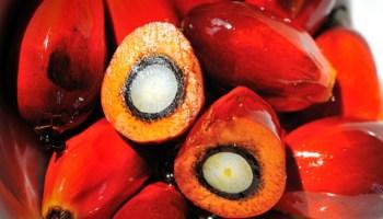 découvrez les bienfaits de l'huile de palme sur les cheveux crépus ainsi que sur la peau