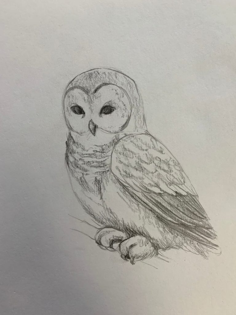 Как нарисовать карандашом сову на ветке 3 этап - фото