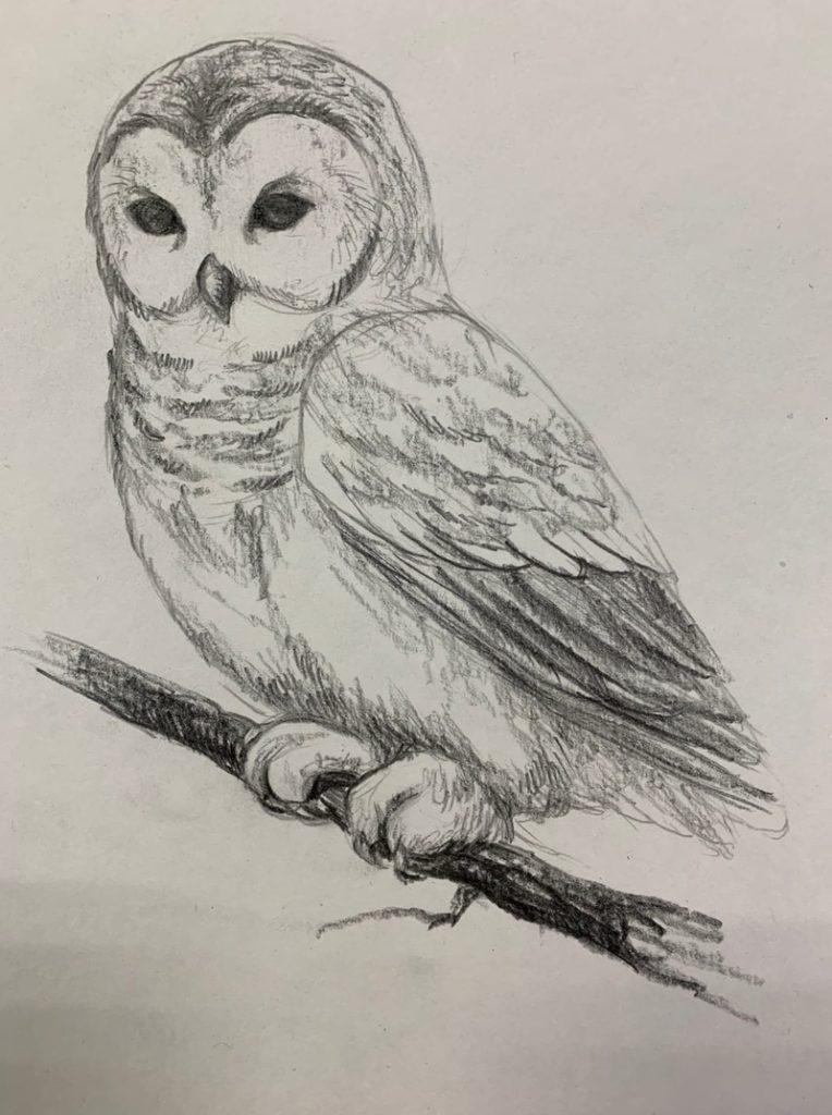 Как нарисовать карандашом сову на ветке 5 этап - фото