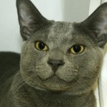 MAX. My Animal ID # is A1042299