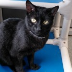 RANGER. My Animal ID # is A1042875.