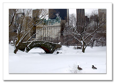 Love Bridge Ducks NY Christmas Card HPC2802