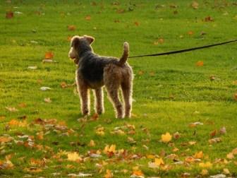 Dog enjoy stroll in a park