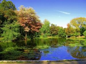 A park next to a lake.