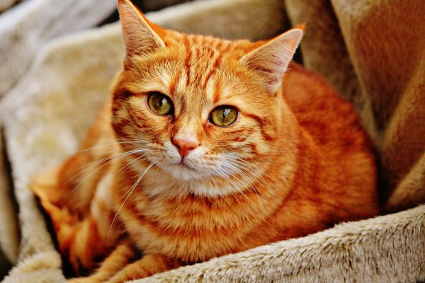 What is the best way to make your cat feel comfortable in a new home?