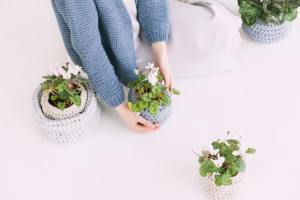 Getting indoor plants for a small apartment with sweaters.