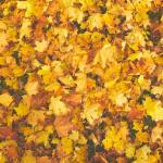 an image of yellow and red leaves, find out the Pros and cons of moving during fall