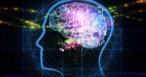 İnsan beyni 40 yaşından sonra küçülmeye başlıyor