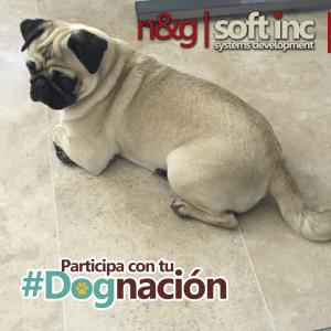 visitas #dognacion