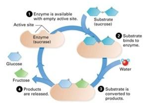 biology | Nygma Science