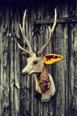 deer head 2 eamonn