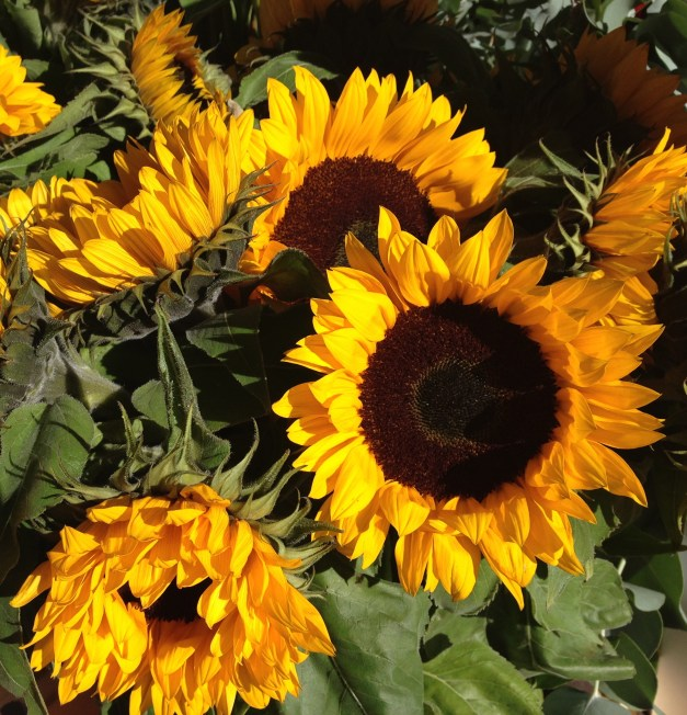 sunflowers amsterdam