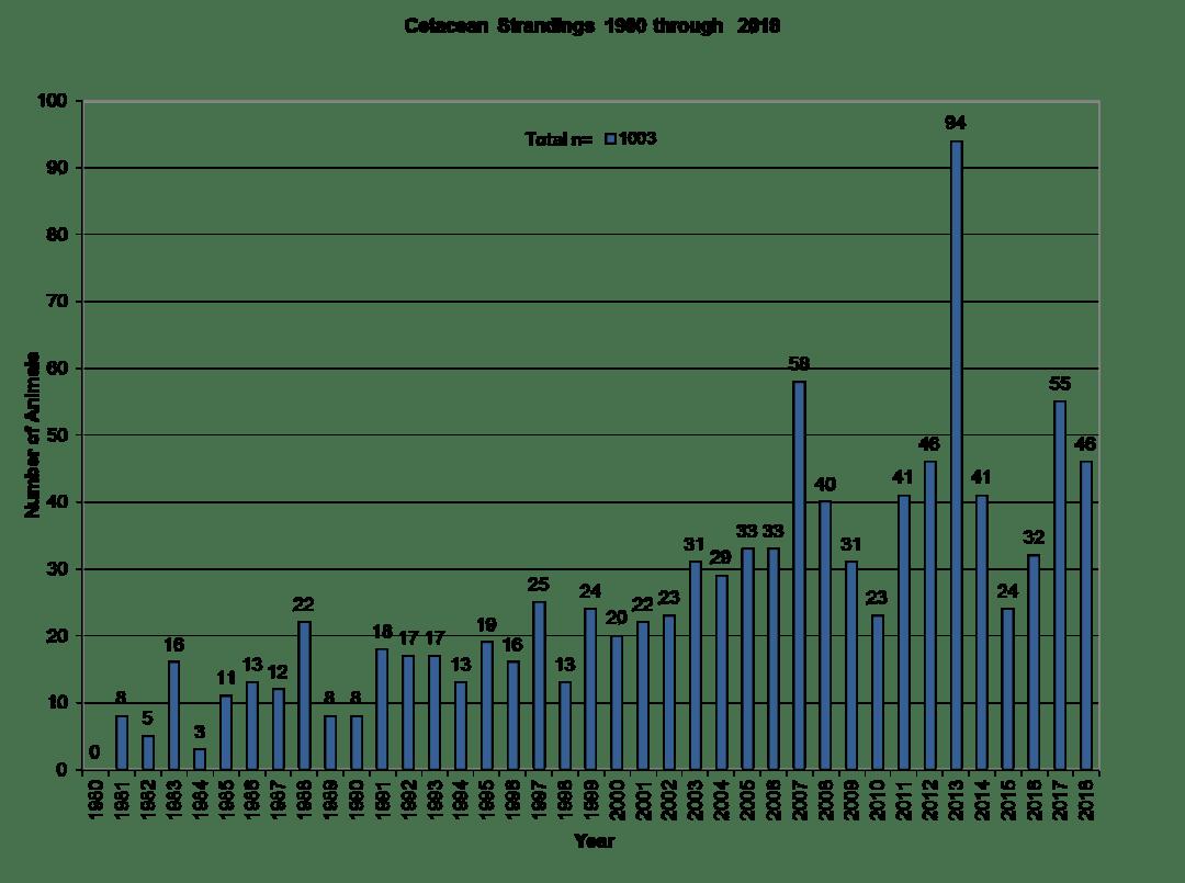 Cetacean-Strandings-through-2018