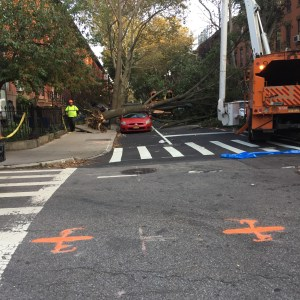 A Tree Falls in Brooklyn