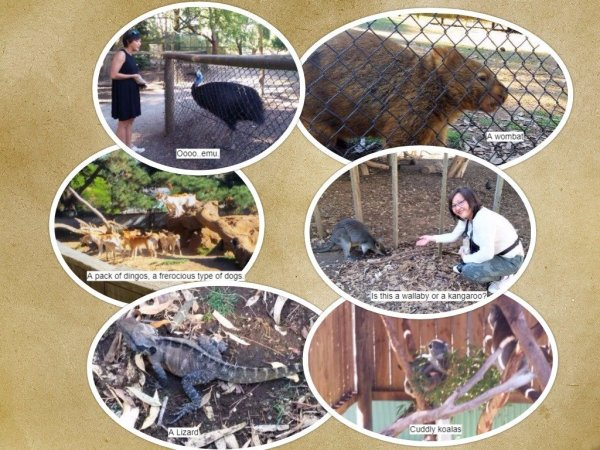 Phillip Island, wildlife park, kangaroo, wallaby, dingoes, koala, lizard, emus