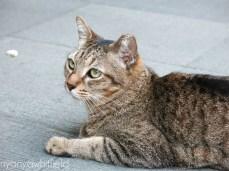 nyonya-chubby-cat-chinatown