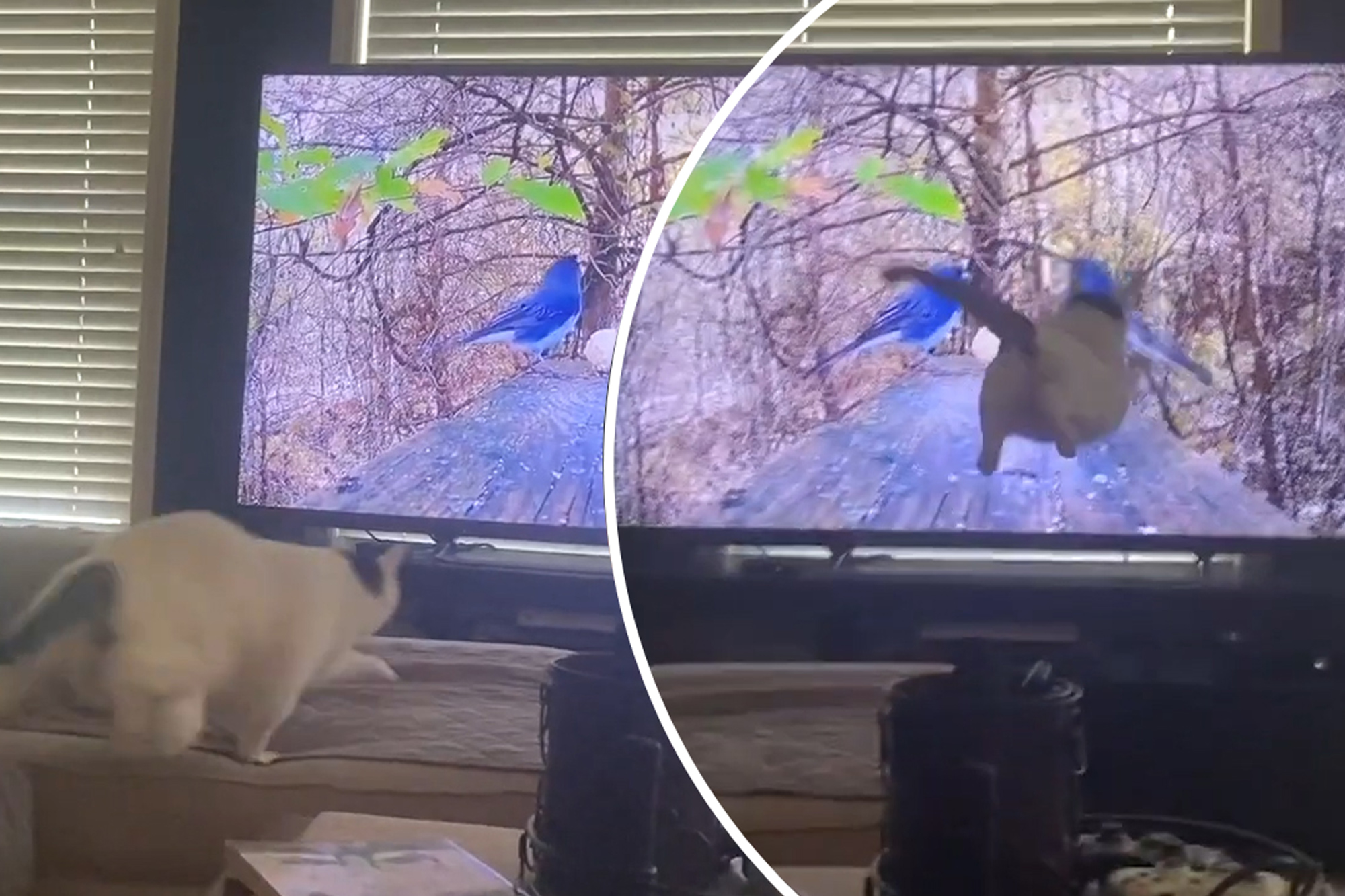 Funny Cat Video Kitty Jumps At Birds On Tv Screen Video New York Post