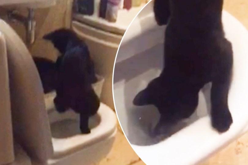 cat toilet wp thumb
