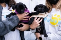 Dogs find homes at London Jewelers and Rescue Paw Foundation