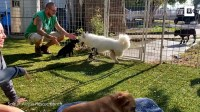 Disabled dog walks on prosthetic legs for the first time (Video)