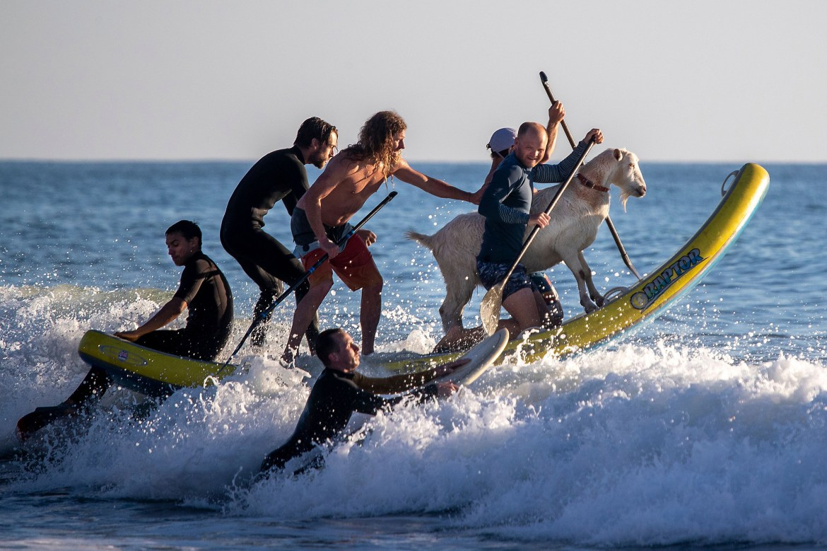 the surfing goats 1 1