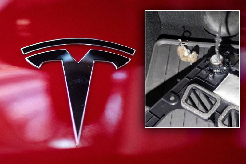 The Tesla logo next to a photo fo a dead rat.