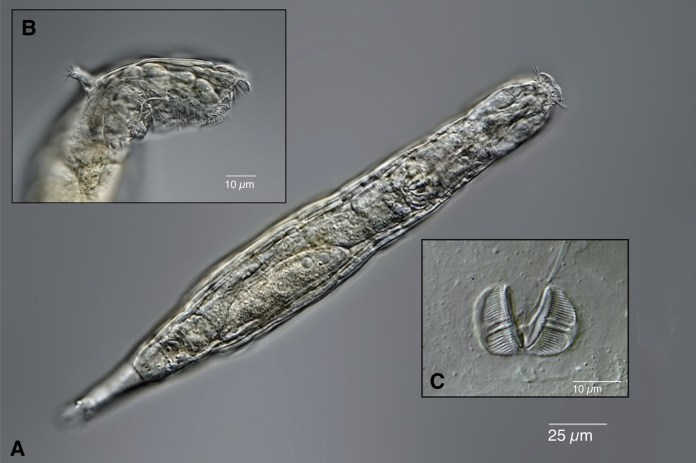 permafrost worms