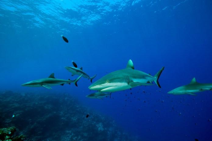 sharks 35
