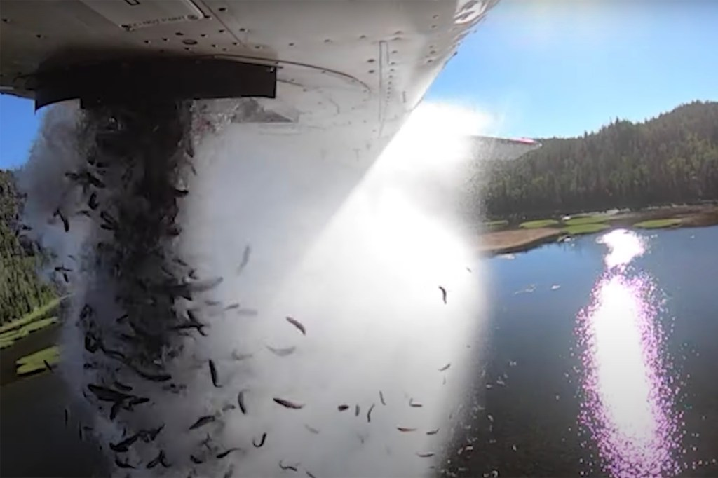 WATCH: Thousands of fish dropped from plane into Utah lakes in wild video