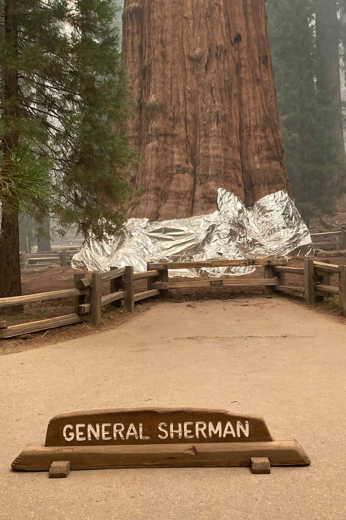 Crews applied aluminum blankets onto the General Sherman Tree to prevent the historic sequoia from getting too hot.